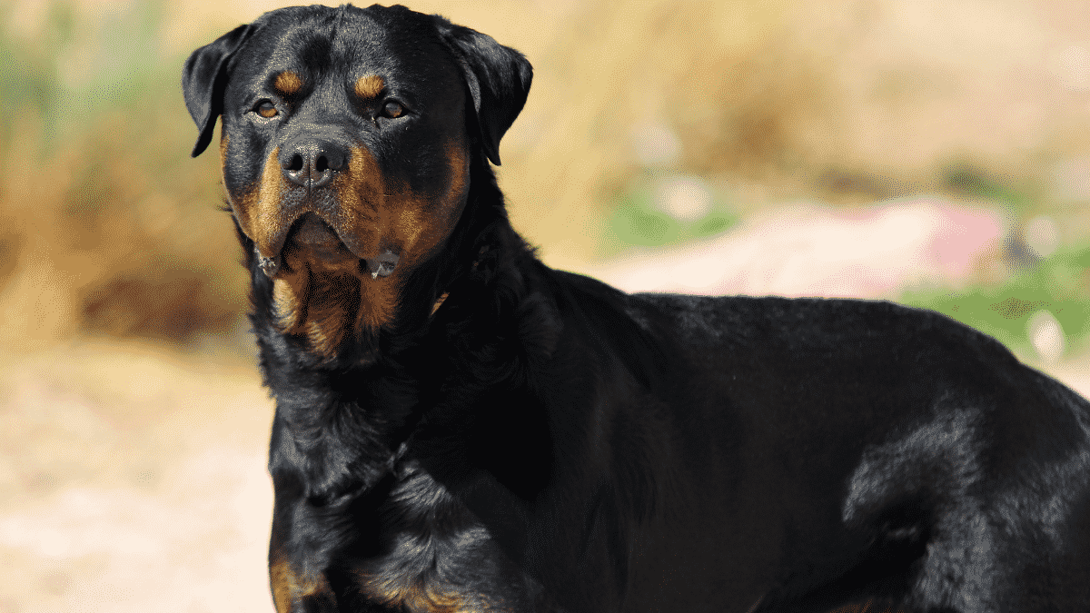 Worst Dog Breeds For Families With Kids