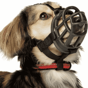 What Is The Best Muzzle For A Small Dog?