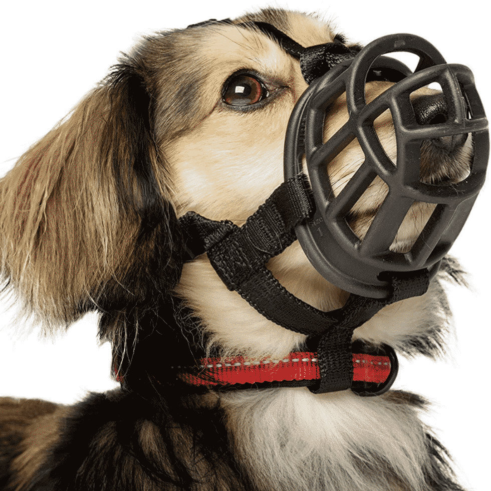 What is a Dog Muzzle and How to Choose the Right Kind for Your Dog? Dogsized