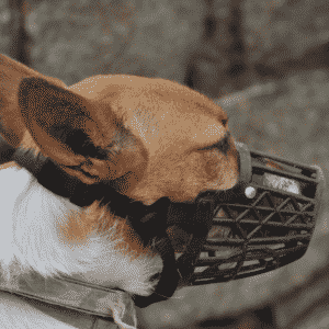 What is a Dog Muzzle and How to Choose the Right Kind for Your Dog?
