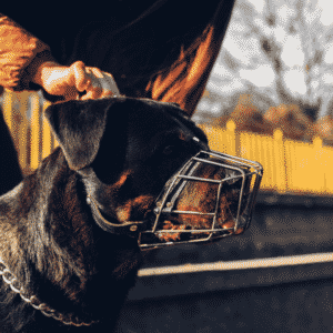 Best Way To Train Your Dog With A Dog Muzzle
