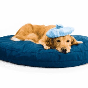 Do Dog Cooling Pads Really Work?