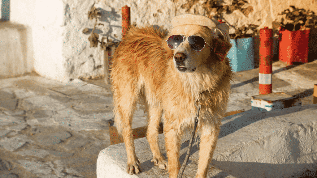 Can Dogs Get Sunburned? Dogsized