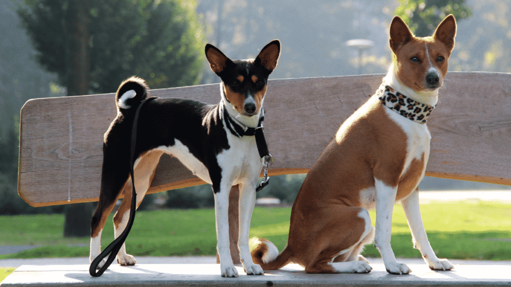 Short Haired Dogs You'll Fall In Love With Dogsized