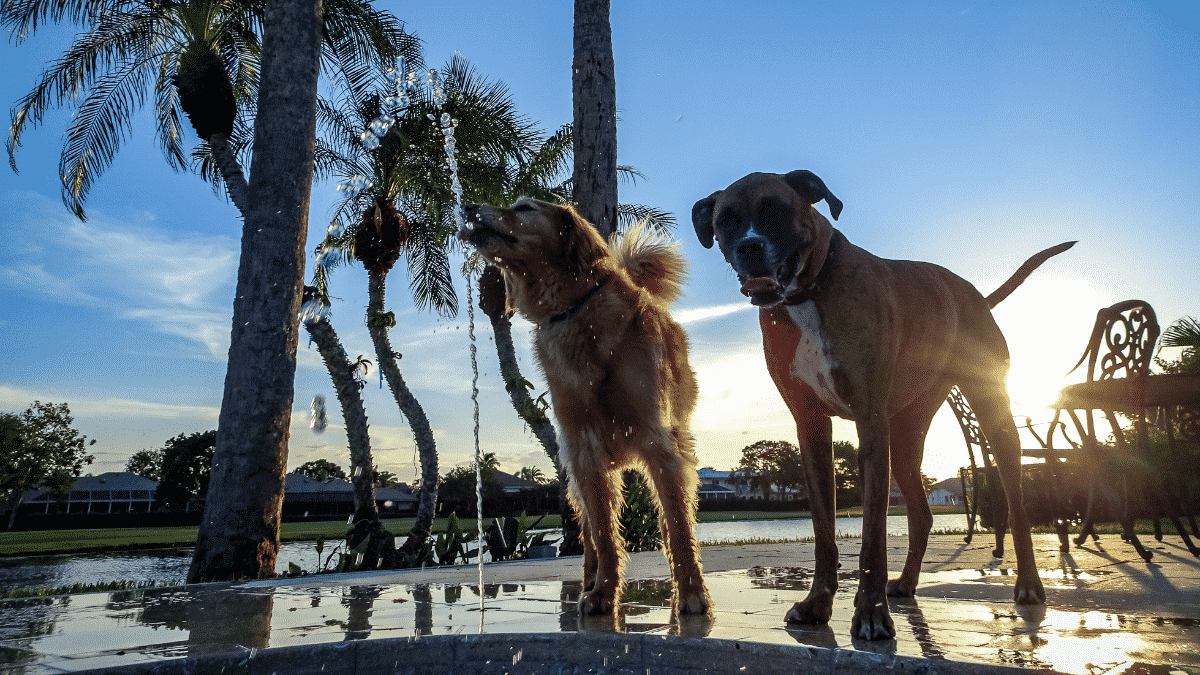 How To Care For Big Dogs?