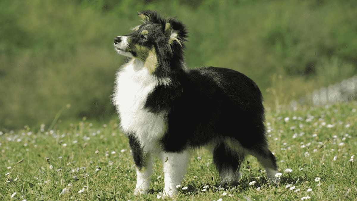 Small Dog Breeds That Are Actually Medium Dog Breeds