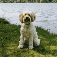 The Most Adorable Dog Breeds That Don't Shed Dogsized