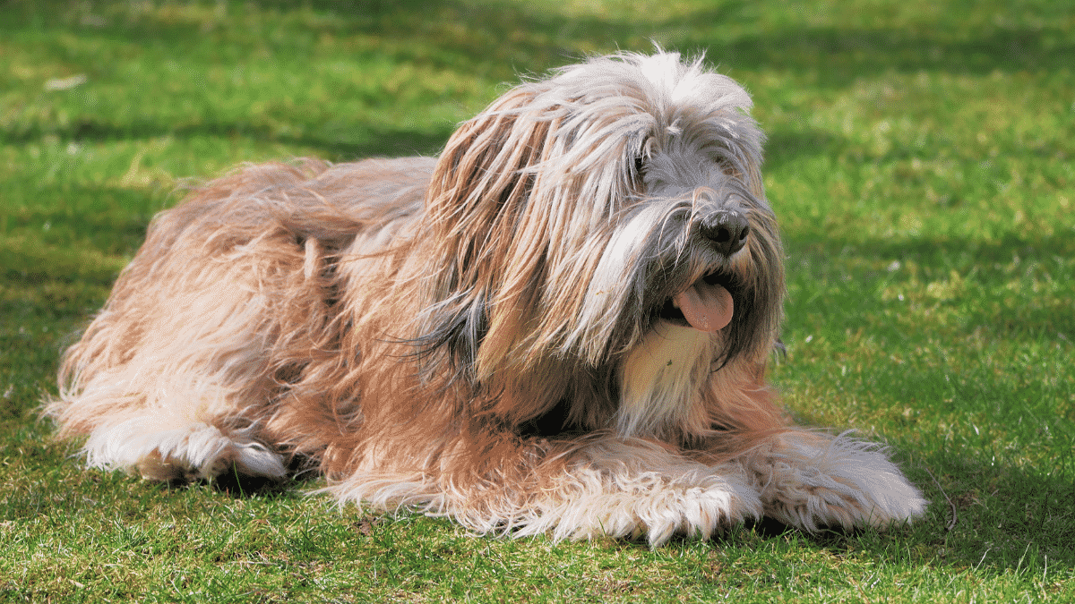 The Most Adorable Dog Breeds That Don't Shed