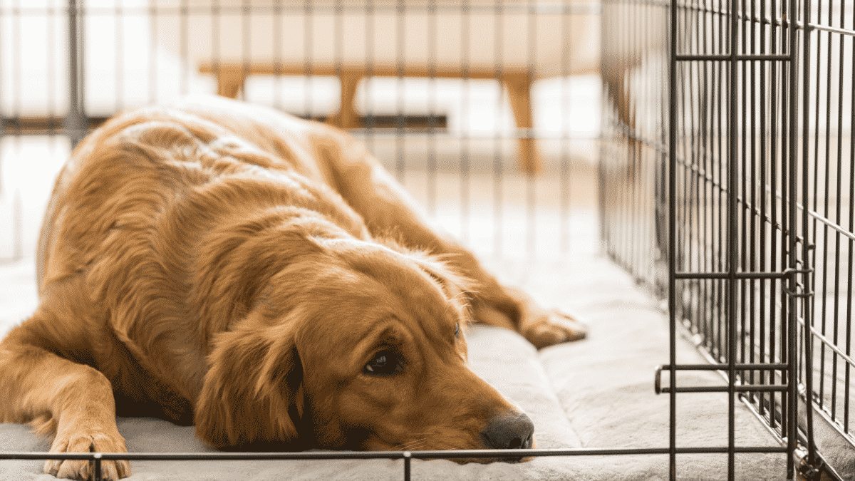 Choosing The Right Crate For Different Dog Sizes