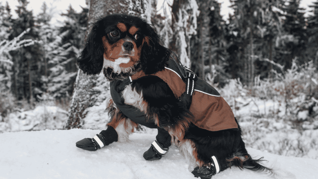 Tips To Keep Even The Smallest Dog Warm When It's Cold Dogsized