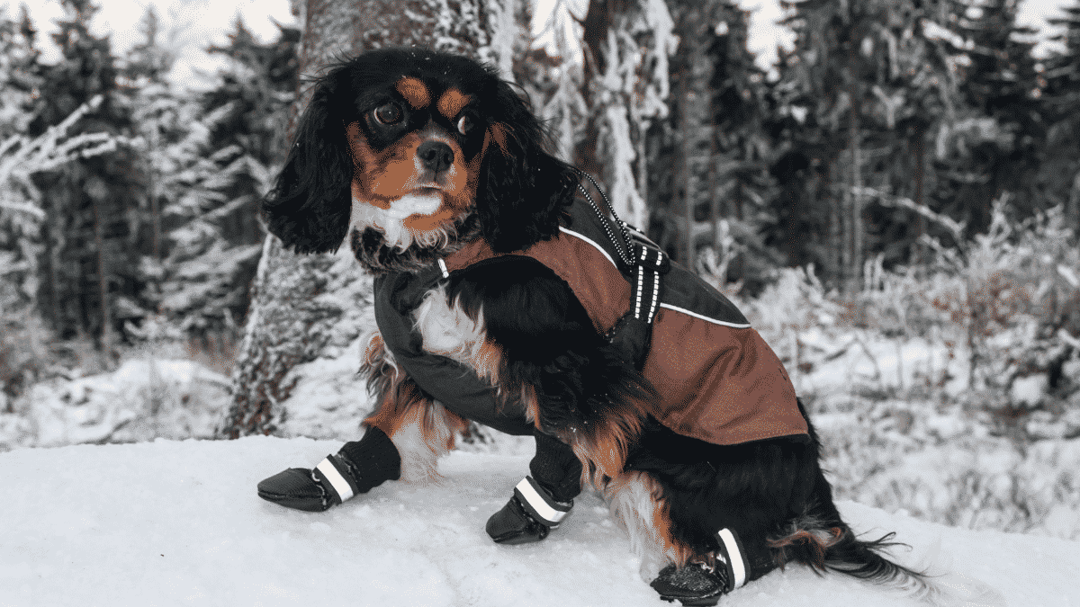Tips To Keep Even The Smallest Dog Warm When It's Cold